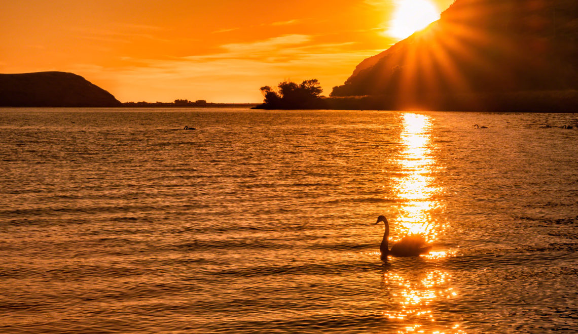 Sunset Swans Lake Wakatipu